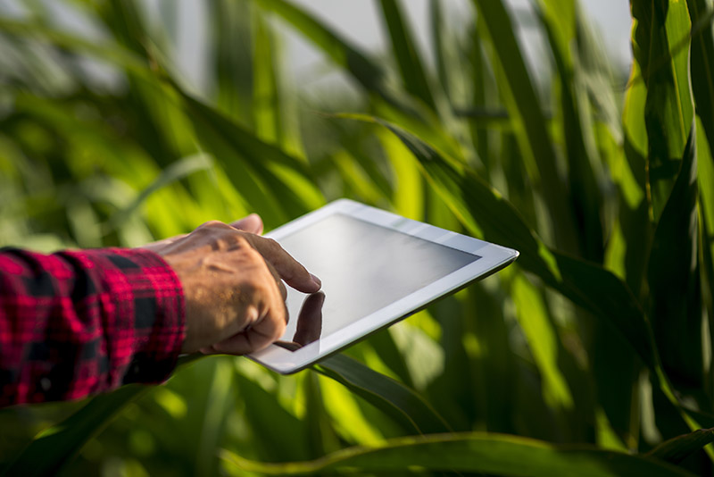 close-up-man-using-a-tablet-in-a-field